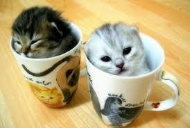 cute cat2