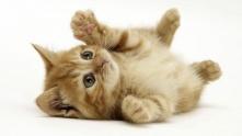 cute cat3