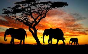 elephant theme pic