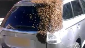 bees-on-car