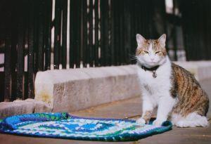 Larry-blanket