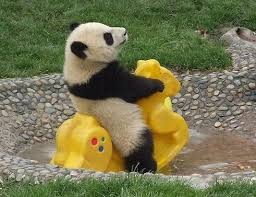 panda-pika