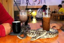 snake-cafe-2