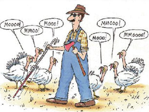 turkey-3.jpg