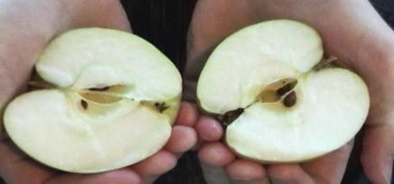 mon-apple-2