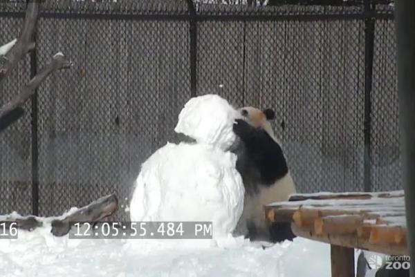 panda-snowman