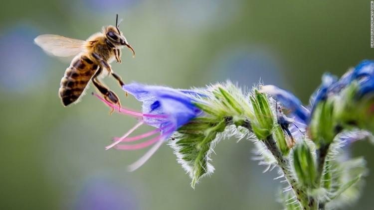 bee-on flower-2.jpg