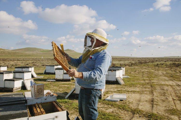 Bees-beekeeper.jpg