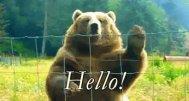 devos-bear