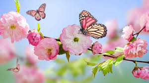 monday-spring