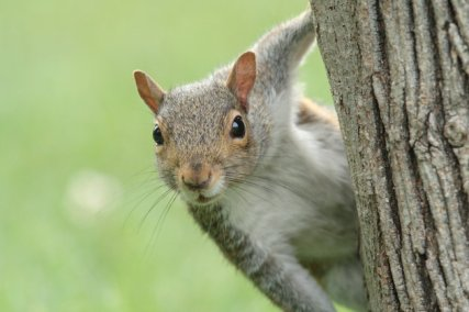 A squirrel working its way to the bird feeder