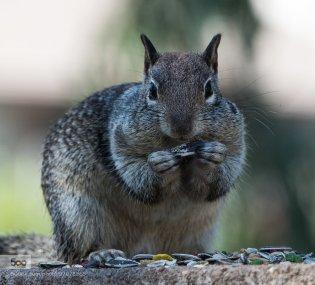 monday-squirrel-2