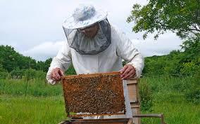 Monday-beekeeper