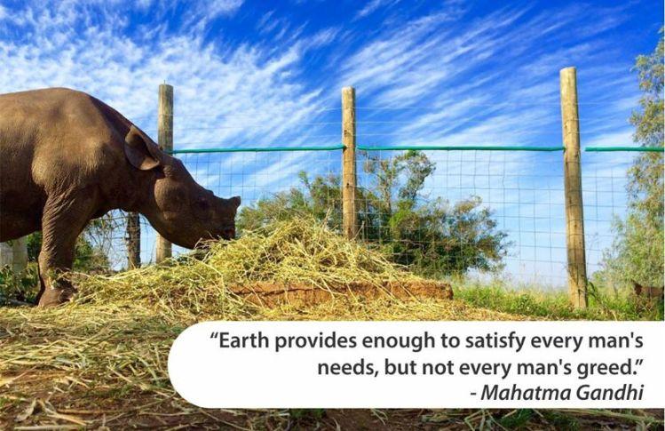 Rhino-Gandhi