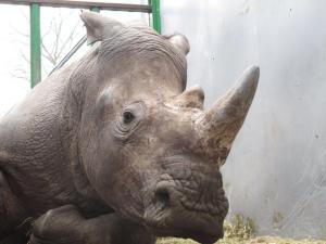 Rhino-Vince