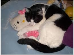 Monday-cat-1