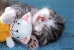 Monday-cat-2