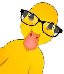Monday-last-duck