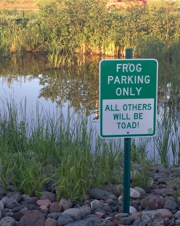 Monday-frog-sign