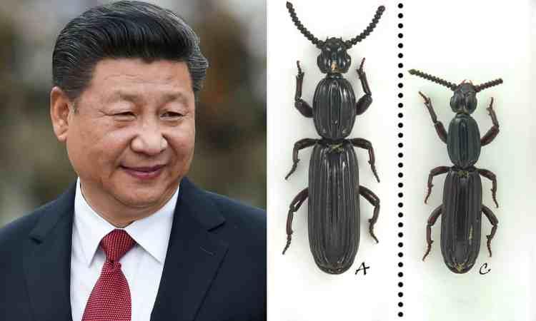 Pooh-Xi-beetle