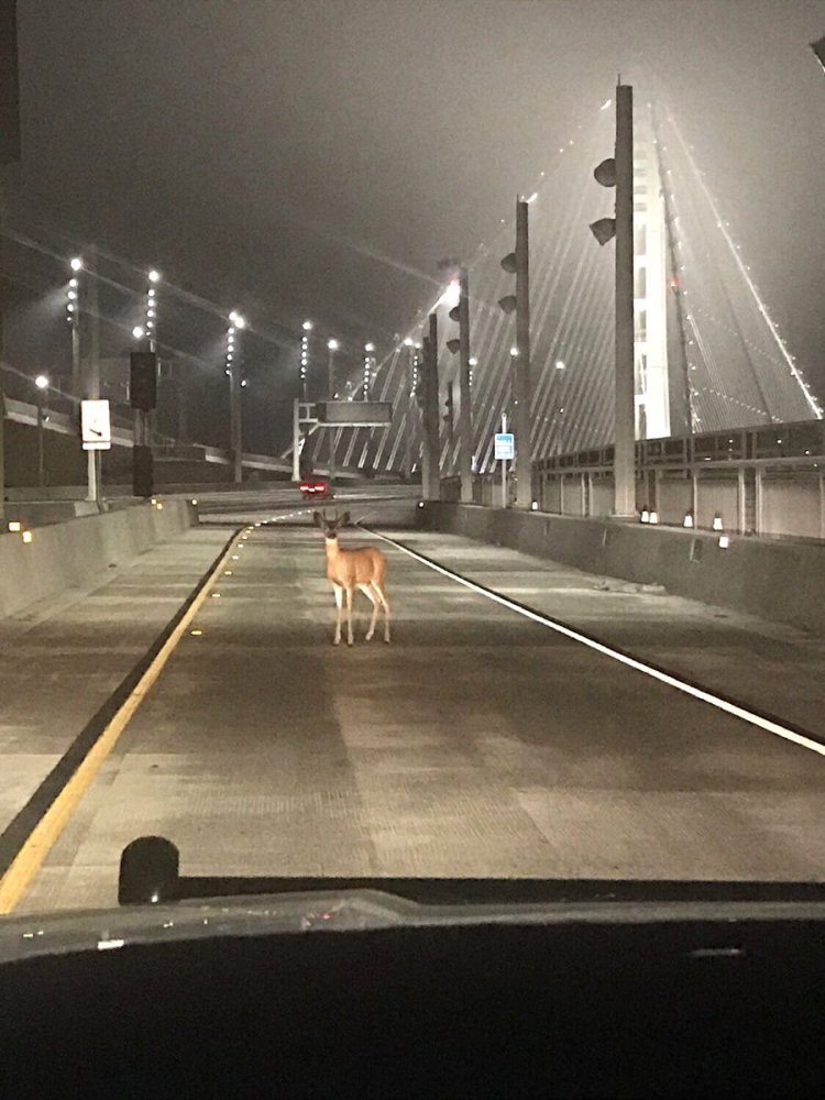 deer-on-bridge