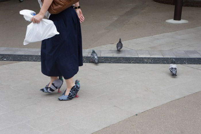 pigeon-shoes
