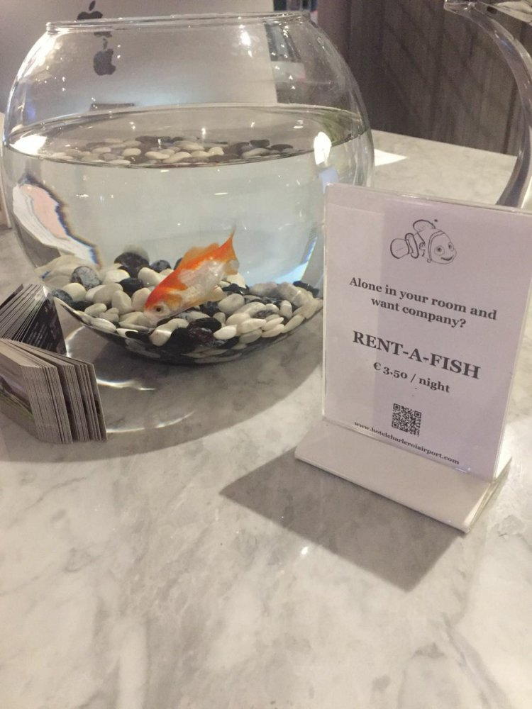 rent-a-fish
