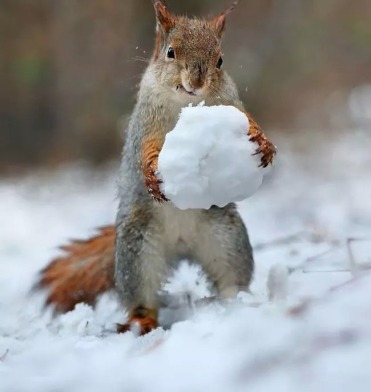 squirrel-snoball-2