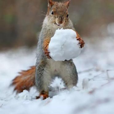 squirrel-snoball-2