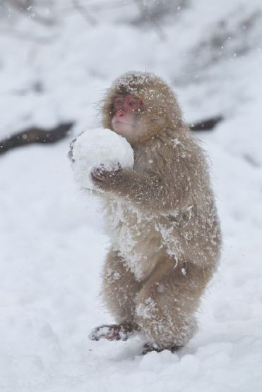 squirrel-snowball-1