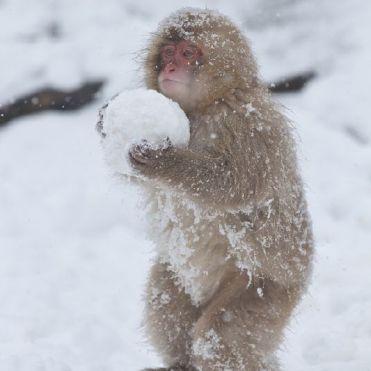 squirrel-snowball-1