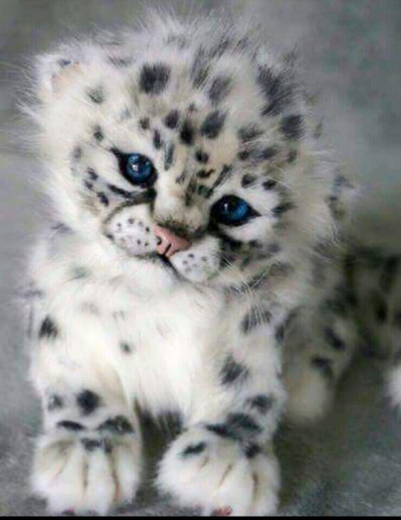 cute-2