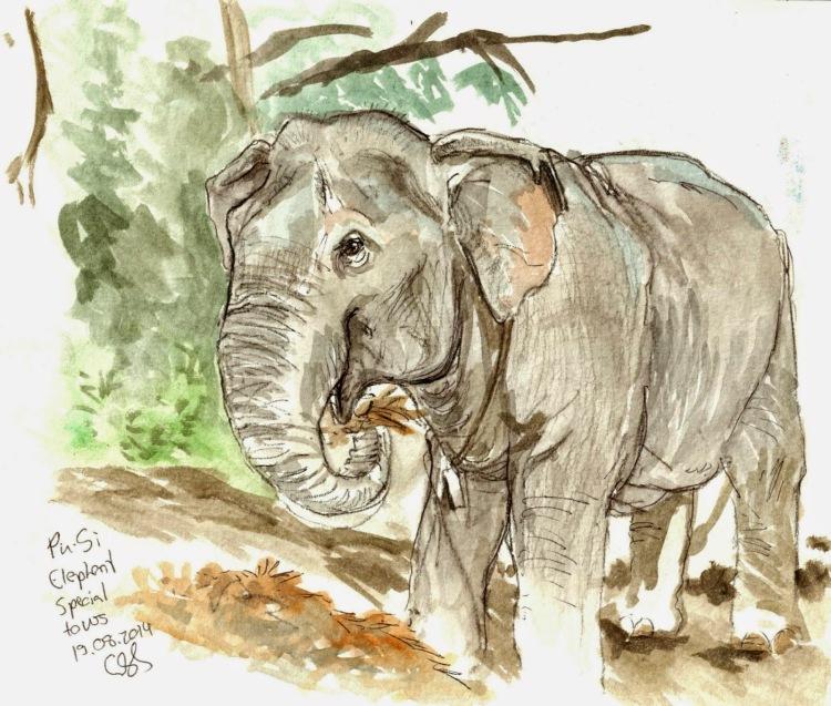 elephant-drawing.jpg