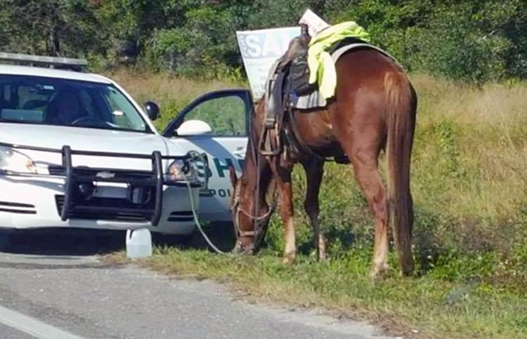 horse in dui