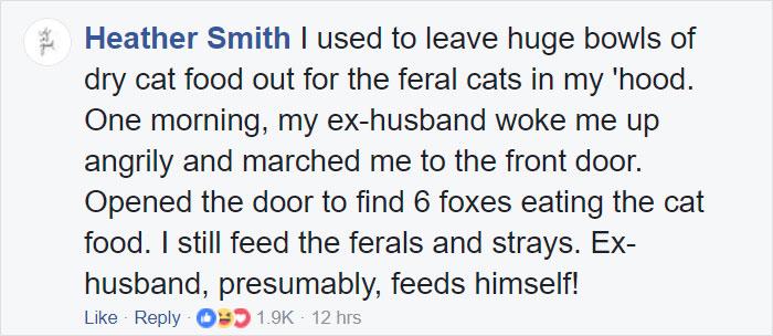 fox-comment.jpg