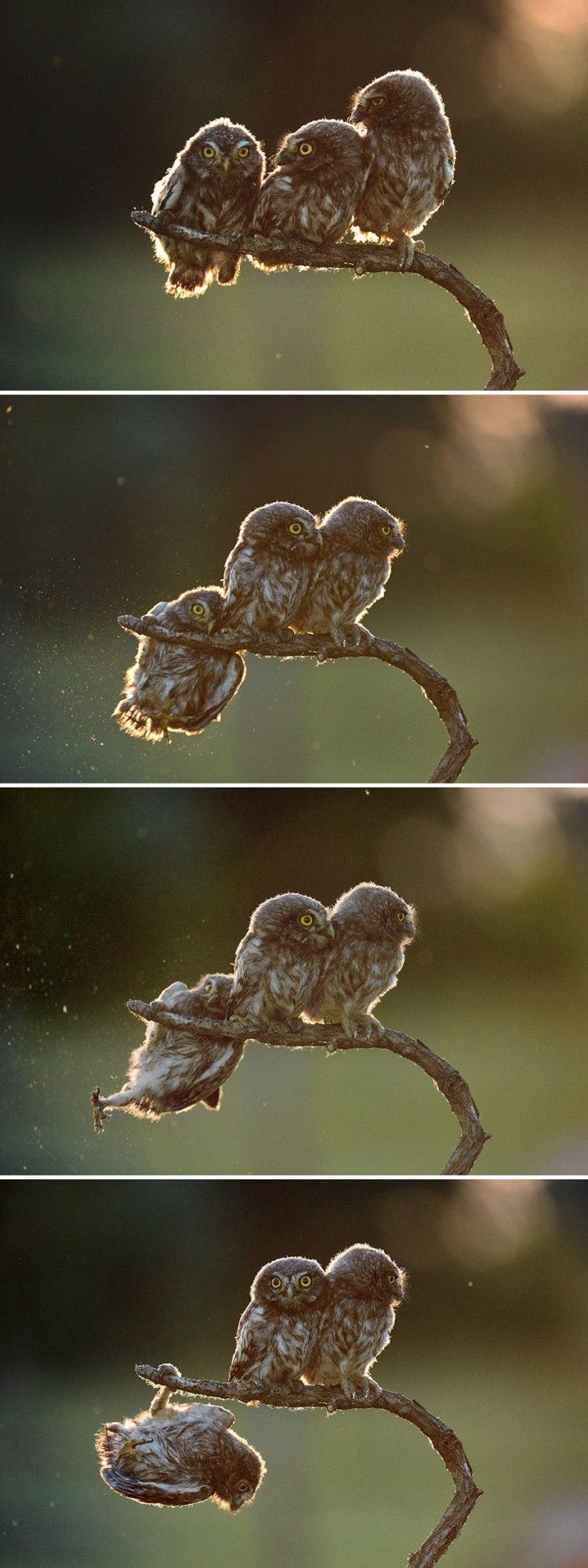 owls-1.jpg