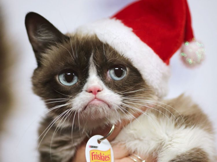 Grumpy Cat arrives to ride in the 84th Annual Hollywood Christmas Parade in the Hollywood section of Los Angeles, California.