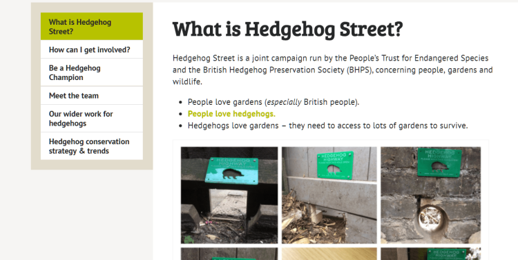 hedgehog-street.png