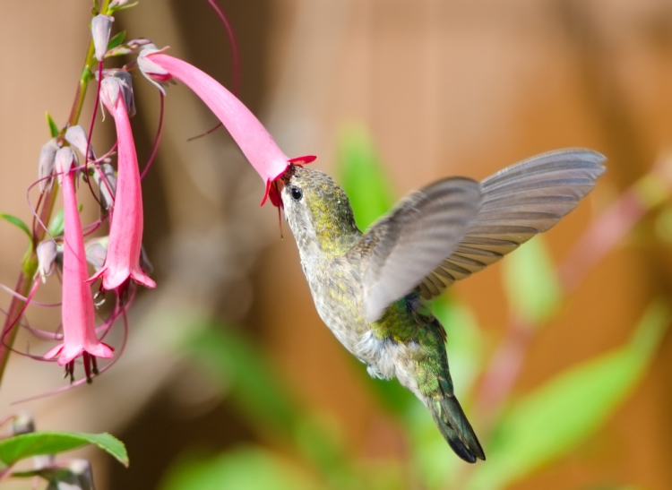 hummingbird-10.jpg