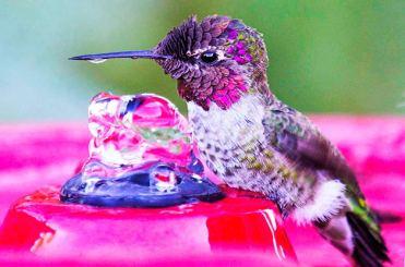 hummingbird-7