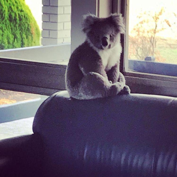 koala-school