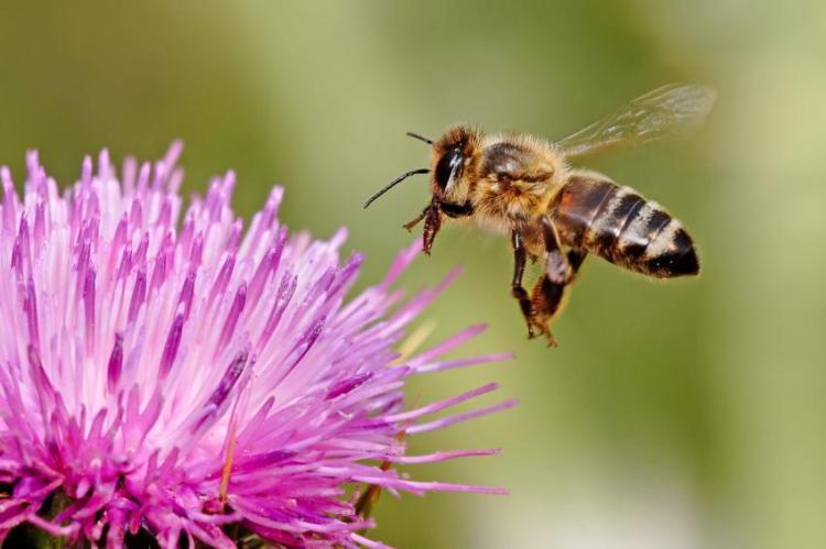 HAPPY EARTH DAY Flower-bee