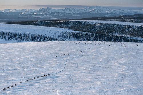arctic-7