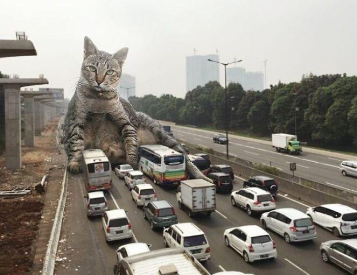 cat-7