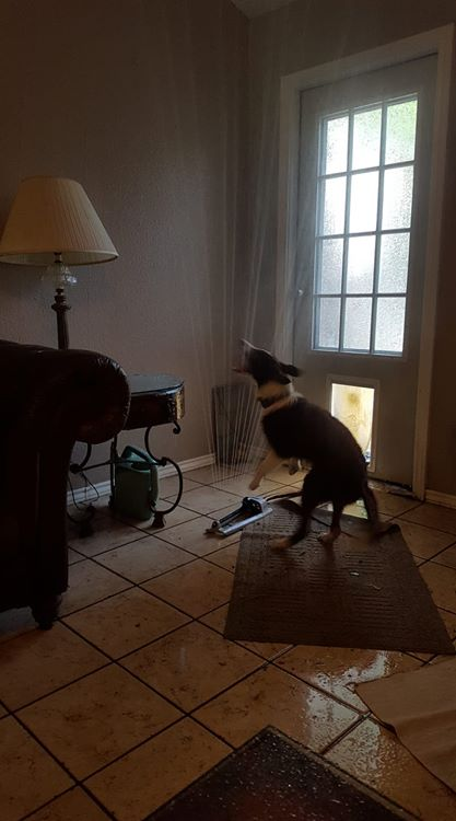dog-sprinkler
