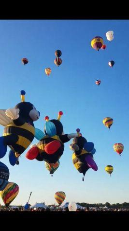 balloon-bees