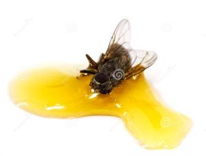 fly-honey
