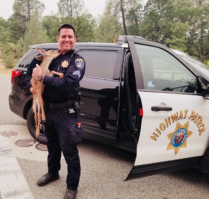 police rescues deer