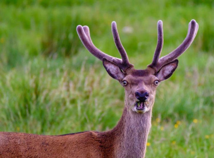 deer-2.jpg