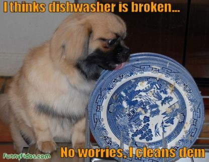 dishwasher-doggie